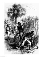 Slaves Working on a Plantation Fine-Art Print