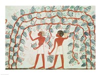 Picking grapes, from the Tomb of Nakht Fine-Art Print