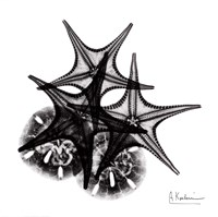 X-ray Starfish & Sand Dollar BW Fine-Art Print