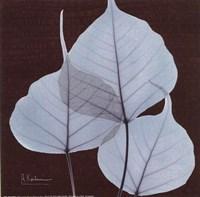 X-ray Leaf Study in Teal II Fine-Art Print