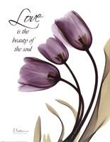 Blackberry Tulips, Love Framed Print