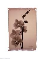 Polaroid Orchid Fine-Art Print
