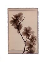 Polaroid Magnolia Fine-Art Print
