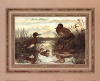 Anonymous - Ducks Fine-Art Print