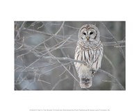 Owl In The Woods Fine-Art Print