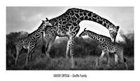 Giraffe Family Fine-Art Print