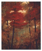 Autumn Woods Fine-Art Print