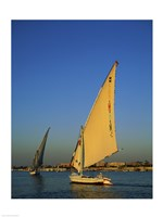 Sailboats sailing in a river, Nile River, Luxor, Egypt Fine-Art Print