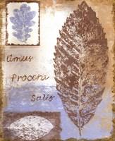 Leaf III Fine-Art Print
