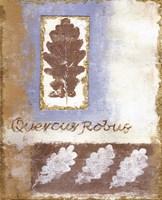 Leaf IV Fine-Art Print