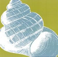 Graphic Shell III Fine-Art Print