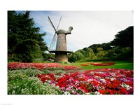 Low angle view of a windmill in a park, Golden Gate Park, San Francisco, California, USA Fine-Art Print
