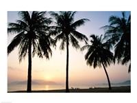 Silhouette of palm trees on a beach during sunrise, Nha Trang Beach, Nha Trang, Vietnam Fine-Art Print