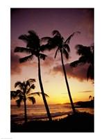 Silhouette of palm trees at sunset, Kauai, Hawaii, USA Fine-Art Print