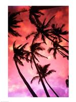 Kauai Hawaii Palm Tree Silhouette Sunset Fine-Art Print