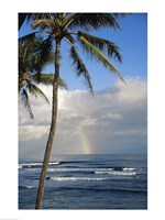 Kauai Hawaii - Palm Tree Fine-Art Print
