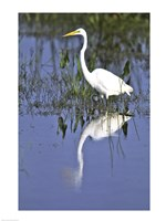 Reflection of a Great Egret in Water Fine-Art Print