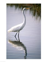 Egret In River Fine-Art Print