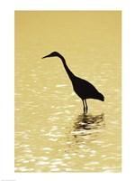 Great Egret in the water Fine-Art Print