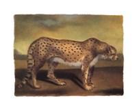 Cheetah Fine-Art Print