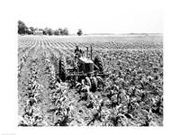 Farmer Driving Tractor in Field Fine-Art Print
