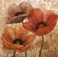 Poppy Allure II Fine-Art Print