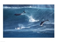 Dolphins Catching A Wave Fine-Art Print