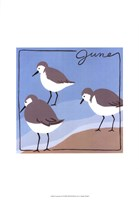 Avian June Fine-Art Print