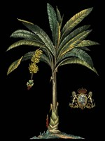 Palm & Crest on Black I Fine-Art Print