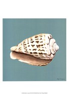 Shell on Aqua II Fine-Art Print