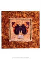 Diva Moth Fine-Art Print