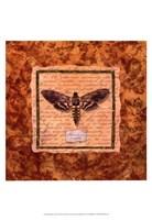Manduca Moth Fine-Art Print
