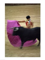 A matador and a bull at a Bullfight, Spain Fine-Art Print