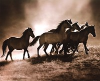 Wild Horses Fine-Art Print