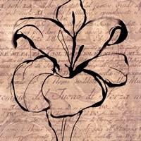 Tulip Thoughts Fine-Art Print