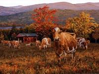 Autumn's Gold Fine-Art Print