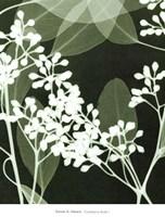 Eucalyptus Buds I Fine-Art Print