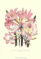 Lily Garden IV Fine-Art Print