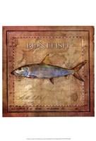 Ocean Fish IV Fine-Art Print