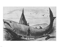 Basking Shark Harper's Weekly October 24, 1868 Fine-Art Print