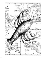 Cancer Hevelius Fine-Art Print