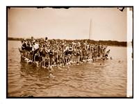 Hawaiian Swimmers at Potomac Tidal Basin Fine-Art Print