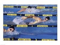 Three swimmers racing in a swimming pool Fine-Art Print