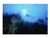 Low angle view of a scuba diver swimming underwater, Belize Fine-Art Print