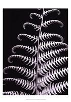 Fern II Fine-Art Print