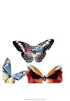 Butterflies Dance II Fine-Art Print