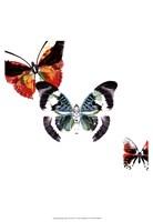 Butterflies Dance III Fine-Art Print
