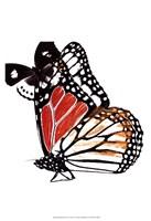 Butterflies Dance IV Fine-Art Print