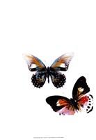 Butterflies Dance VI Fine-Art Print