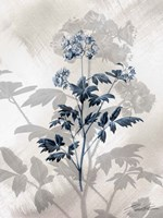 Indigo Bloom II Fine-Art Print